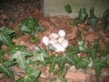 De eitjes.jpg