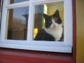 Lola voor het raam.jpg