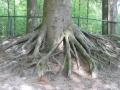 Enorme Bomen.jpg